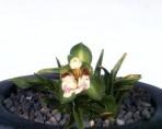 원광8 꽃3